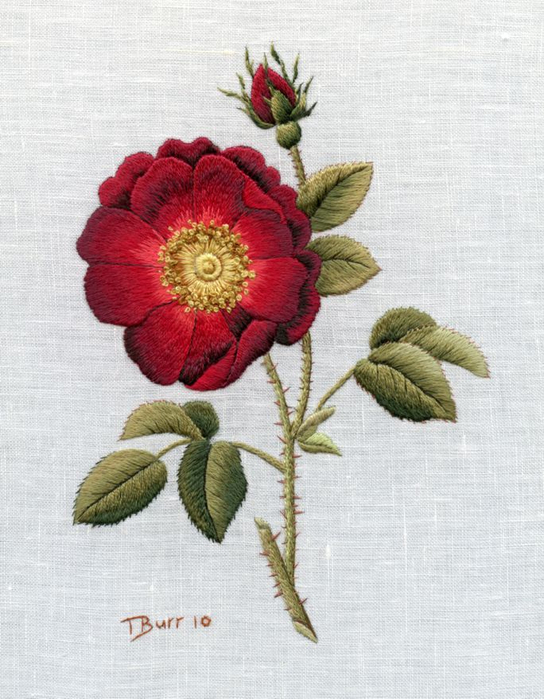 1308995369_complete-rose (544x700, 342Kb)