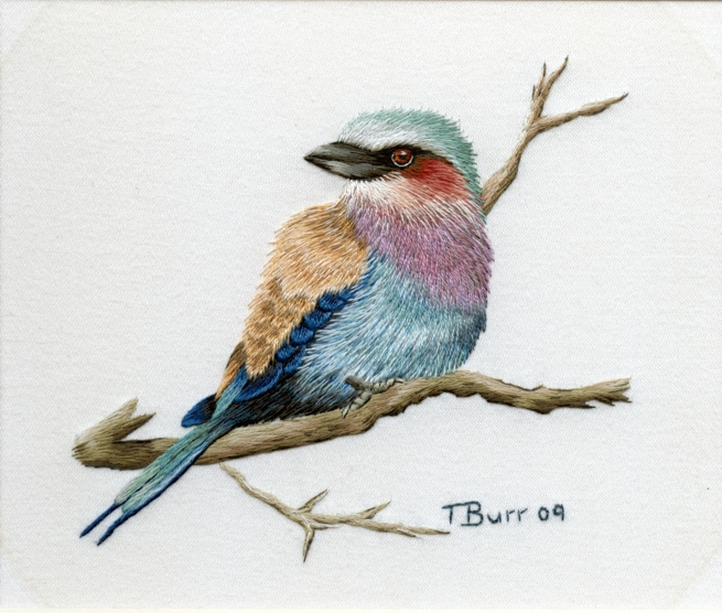 1308995395_lilac-breasted-roller1 (655x556, 386Kb)