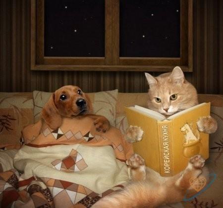 Сказка на ночь. Как появилась кошка
