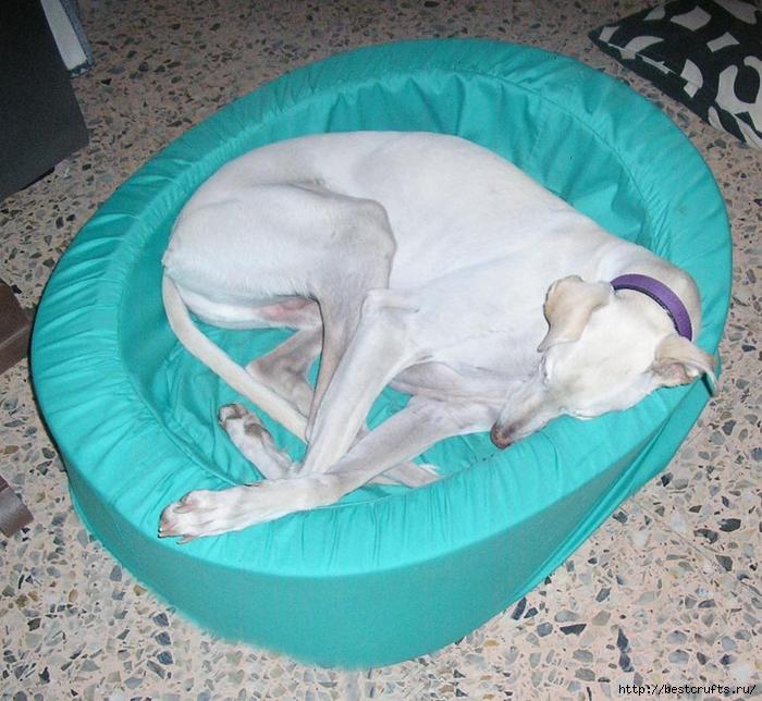 Шьем для собак мастер класс пошагово #2