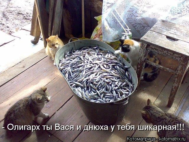 https://img1.liveinternet.ru/images/attach/c/9/106/735/106735421_5285052_kotomatritsa__I.jpg