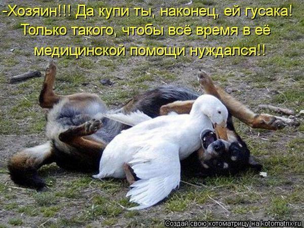 https://img1.liveinternet.ru/images/attach/c/9/106/774/106774221_large_3ac59cc7147138d4bc02e58dec2c4977_95094.jpg