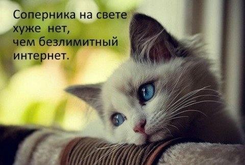 https://img1.liveinternet.ru/images/attach/c/9/107/14/107014261_large_1.jpg
