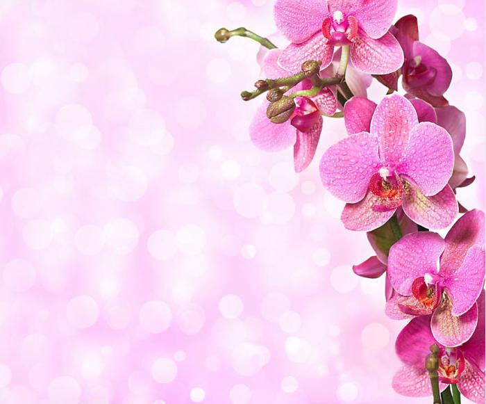 Открытки с орхидеями для фотошопа, дню