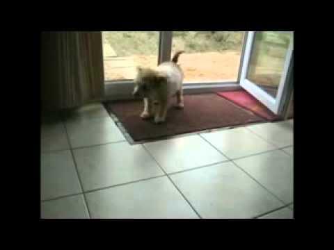 Самая воспитанная в мире собака