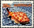 66.3.1.1.6 Orange-Tipped Cowrie (119x100, 18Kb)