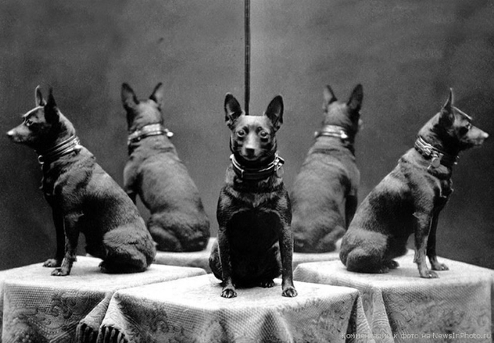 Картинки по запросу притча про собаку и зеркала
