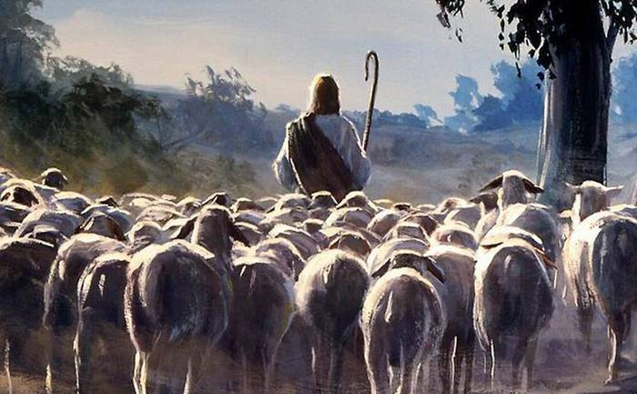 Секс пастуха с овцами