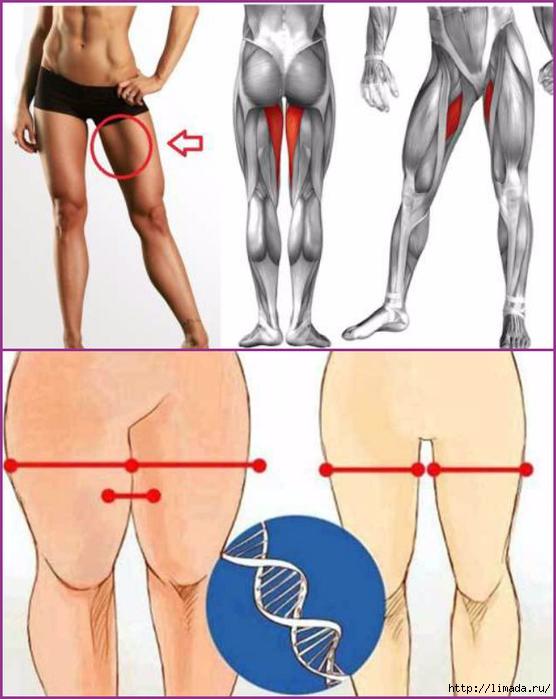 Передняя часть бедра похудения