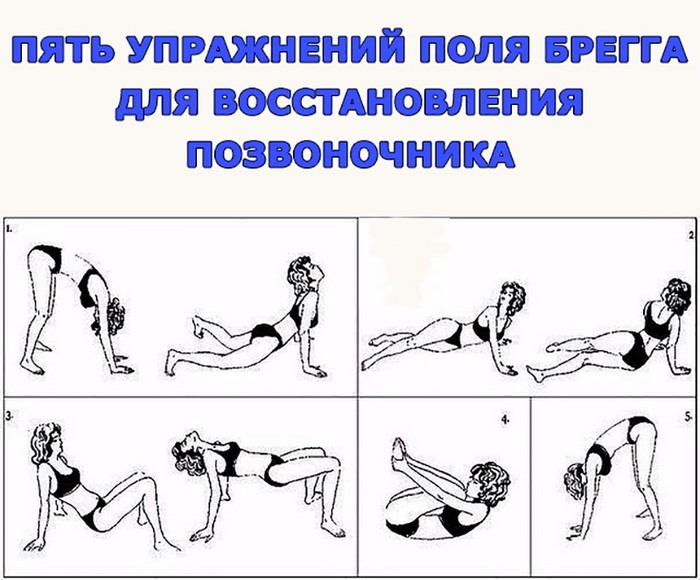 Гимнастика для позвоночника поль брег
