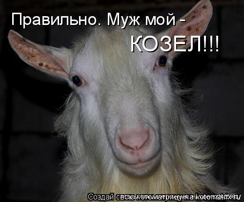 Поздравлениями, смешные картинки про мужа козла