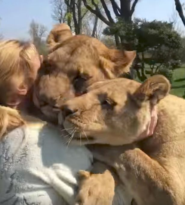 Lions-amazing-reaction-after-seeing-woman-who-reared-them-for-first-time-in-seven-years (1) (615x681, 53Kb)
