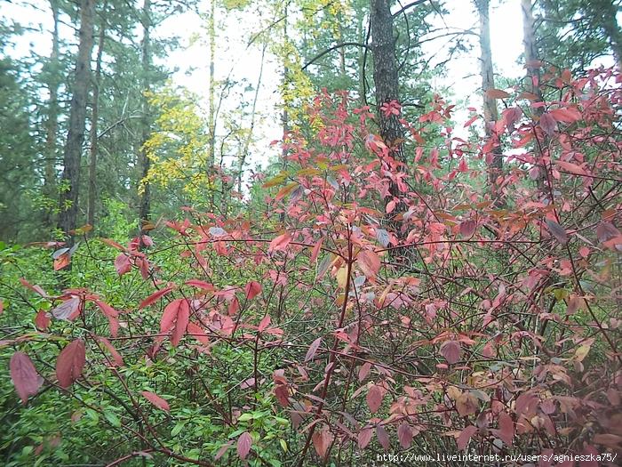открытка листья желтые медленно падают в нашем старом забытом саду