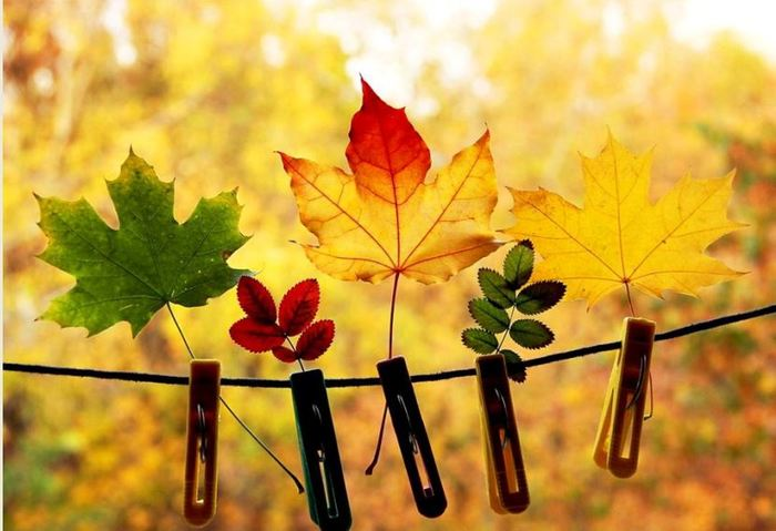 про осень веселые картинки