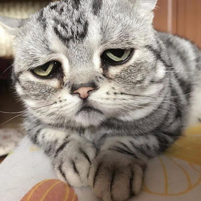 Картинка с грустным котиком, про