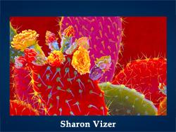Sharon Vizer (200x150, 45Kb)/5107871_Sharon_Vizer (250x188, 103Kb)