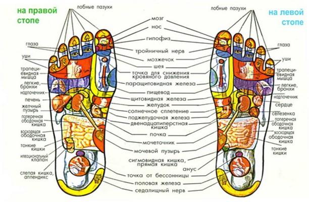 Куда нажать, чтобы взбодриться? Секреты терапии «су-джок» для вашего организма