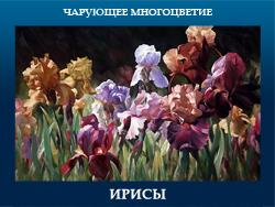 5107871_IRISI (250x188, 89Kb)