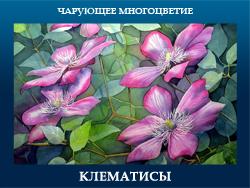 5107871_KLEMATISI (250x188, 94Kb)