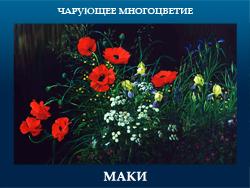5107871_MAKI (250x188, 91Kb)