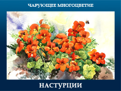 5107871_NASTYRCII (250x188, 97Kb)