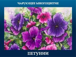 5107871_PETYNII (250x188, 100Kb)