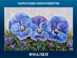 5107871_FIALKI (250x188, 89Kb)
