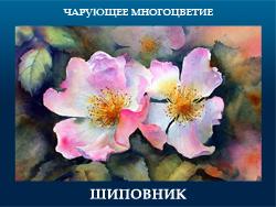 5107871_ShIPOVNIK (250x188, 90Kb)
