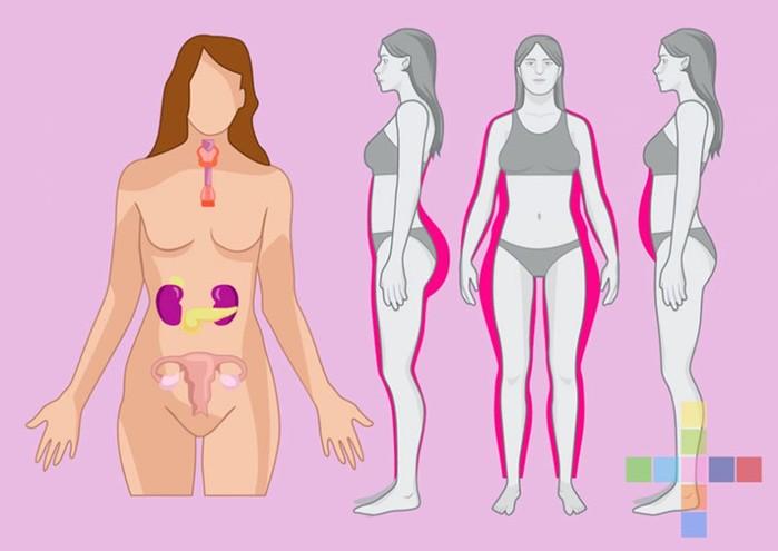 138029241 103017 1505 50 Несколько проблем лишнего веса, которые не связаны с перееданием