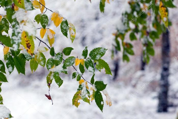 depositphotos_14297595-stock-photo-first-snow-in-the-forest (700x466, 50Kb)