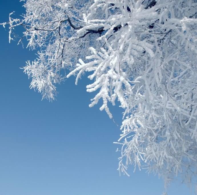 перепелок картинка белый снег пушистый специального допуска