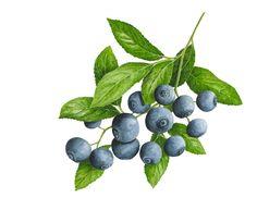 0cc563c08748379f83e8e06ac8148703--watercolor-fruit-strawberry-watercolor (236x193, 7Kb)