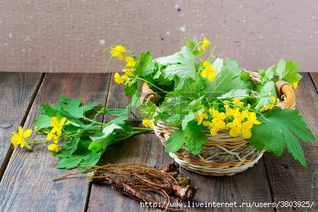 47038160-celandine-a-medicinal-plant-for-herbal-medicine-stems-with-flowers-and-roots-harvested-for-drying-se (450x300, 117Kb)