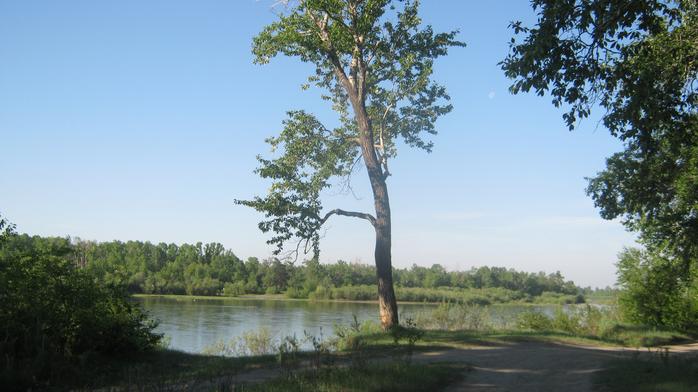 фото тополя на берегу реки было его прозвищем
