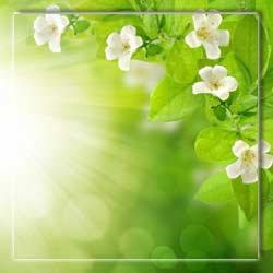 5539794_firestock_green_spring_0908 (250x250, 7Kb)
