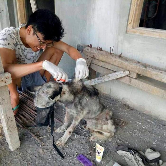 Трогательная история спасения хаски на острове Бали