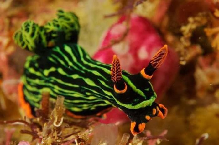 Морские существа, похожие на инопланетные формы жизни: фотографии