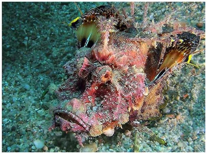 Подводные монстры, название которых четко отображает их суть