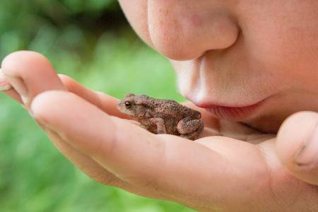 41557618-child-kissing-frog-on-his-hand-mouth-close-to-animal (450x300, 15Kb)