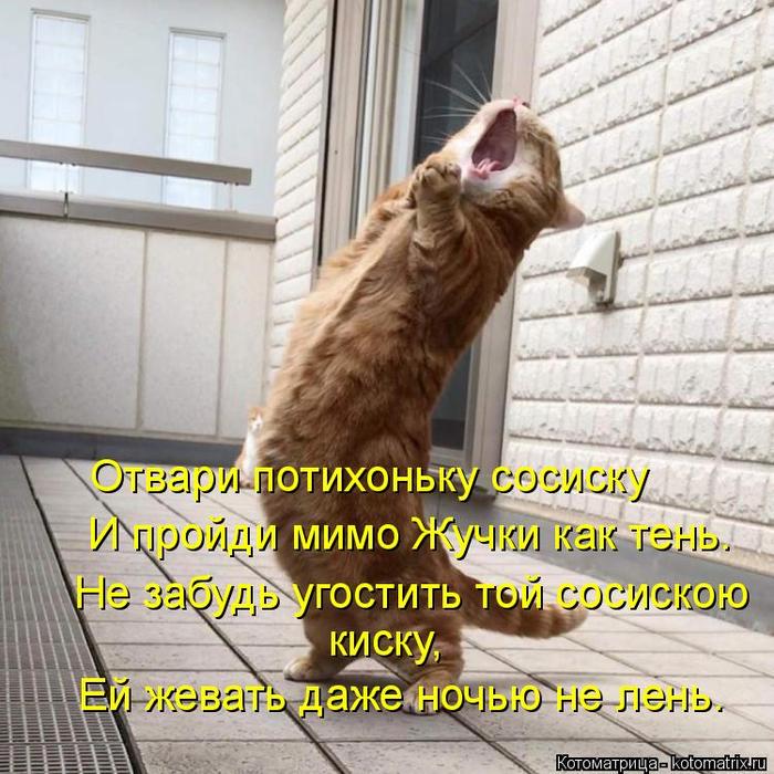 картинки котоматрица пятница