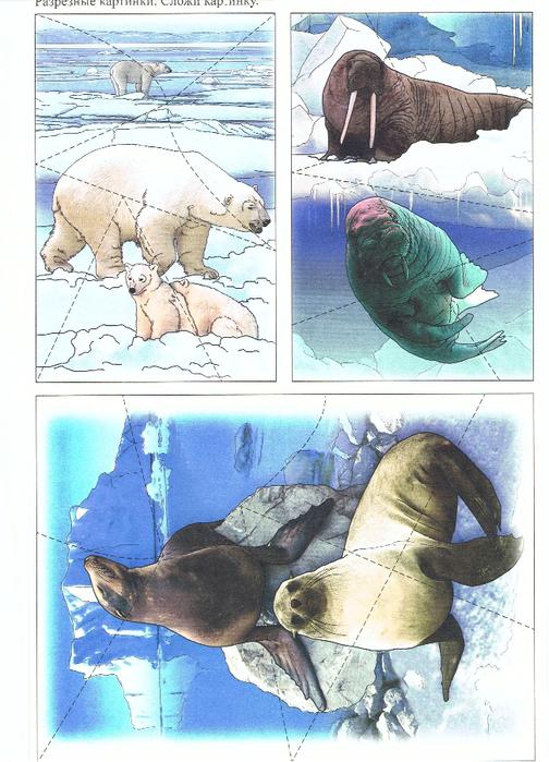 дидактические картинки животные севера