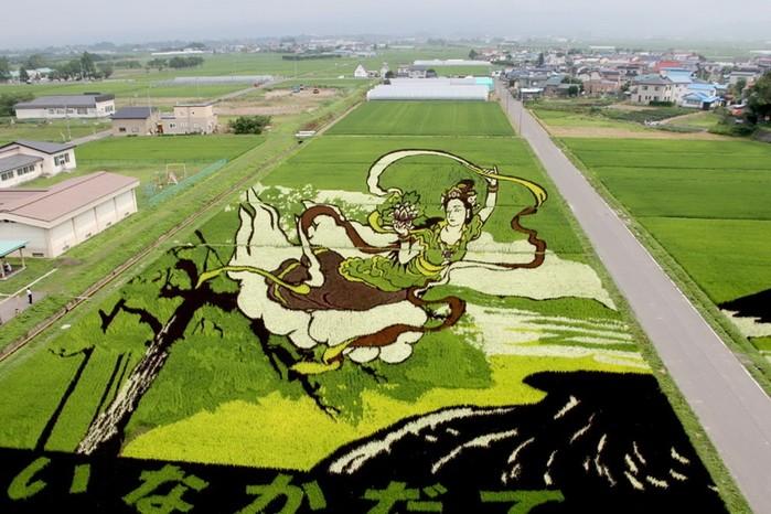 143323929 081218 1803 2 Картины на рисовых полях в Японии: оригинальный способ привлечения туристов