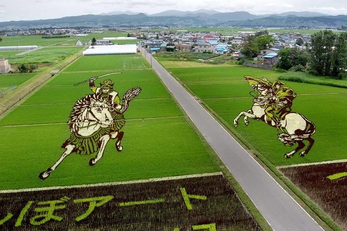 143323931 081218 1803 4 Картины на рисовых полях в Японии: оригинальный способ привлечения туристов