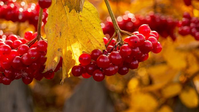 Обняла природу осень...