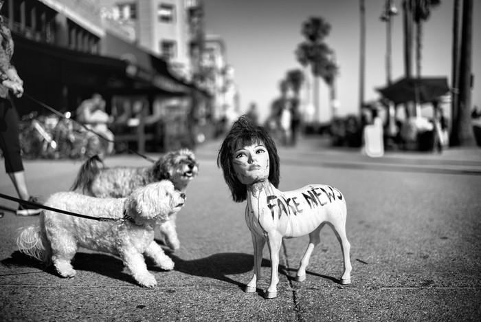 143707425 091418 1040 61 В Лос Анджелесе есть «Венеция»: фотографии безудержного веселья