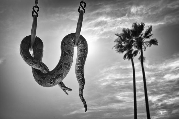 143707445 091418 1040 79 В Лос Анджелесе есть «Венеция»: фотографии безудержного веселья