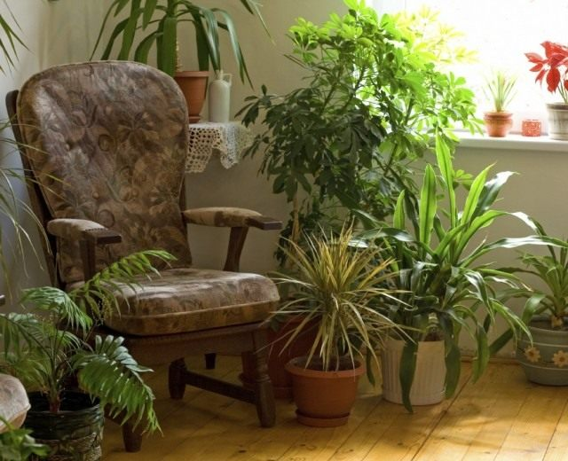 indoor-plants-002-640x520 (640x520, 67Kb)