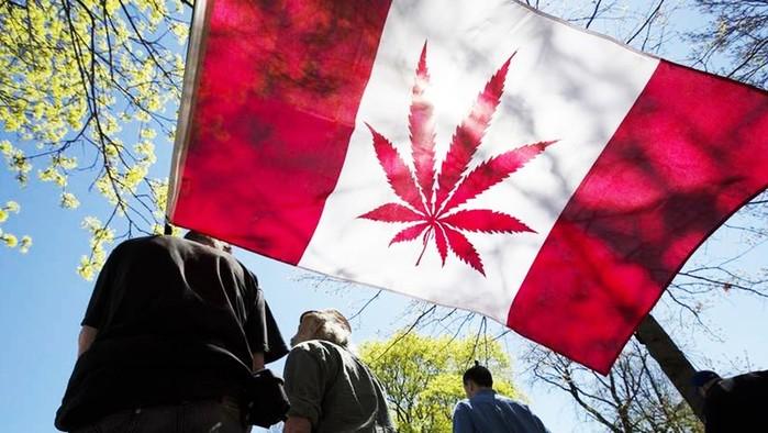 В Канаде ищут дегустатора марихуаны: веселая вакансия