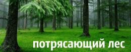 алмазная вышивка леса