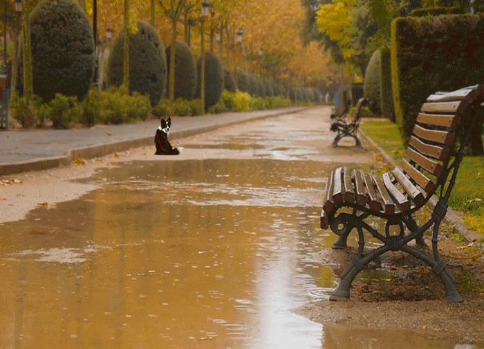 Картинки анимация дождь осенью, картинки